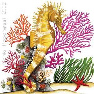 Illustrazioni Naturalistiche Di Sonia Poponessi Grafica E Disegni